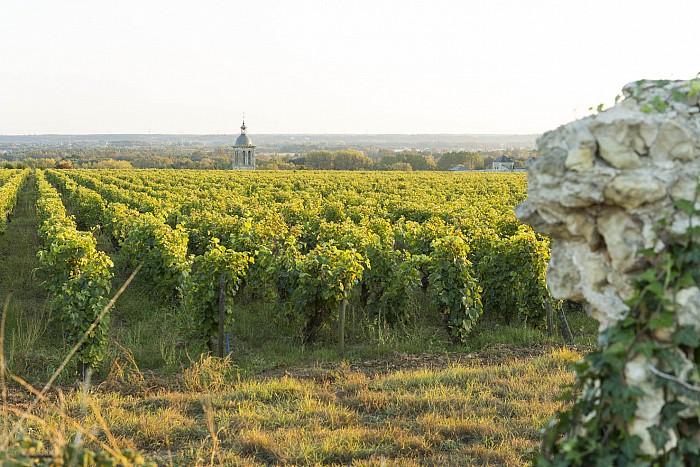 Vins, Vignes, Randos 2017